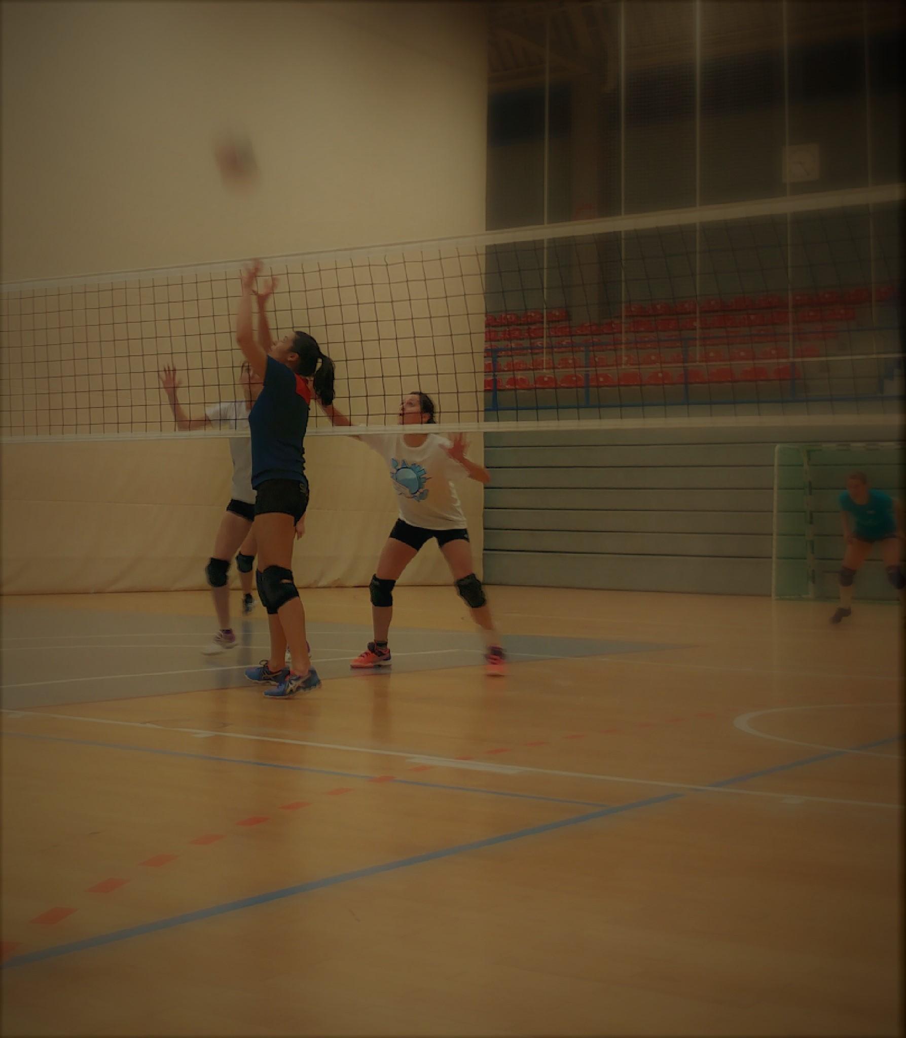 Volleyball Zuspieler