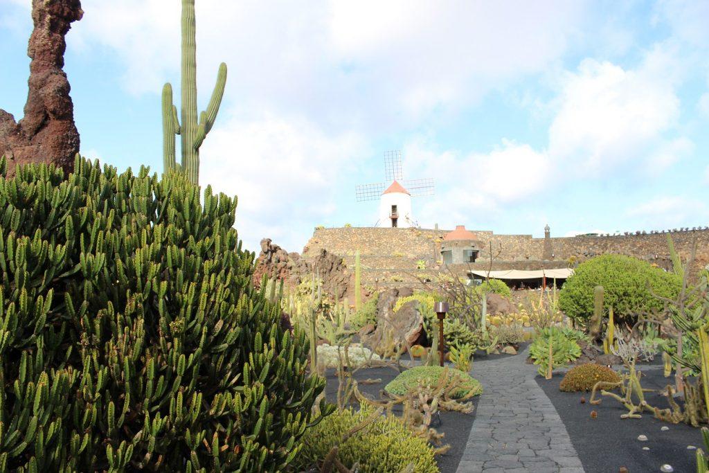 Die Windmühle im Jardin de Cactus auf Lanzarote